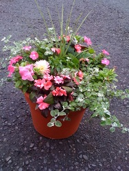 Pot of Beauty from Martinsville Florist, flower shop in Martinsville, NJ