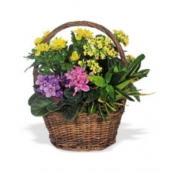 Petite European Basket from Martinsville Florist, flower shop in Martinsville, NJ