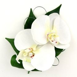 Phalaenopsis Orchid Wristlet from Martinsville Florist, flower shop in Martinsville, NJ