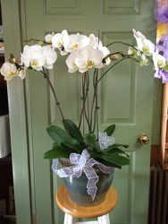 Spectacular Orchid from Martinsville Florist, flower shop in Martinsville, NJ