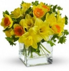 St Patrick's Day Daffodil Vase from Martinsville Florist, flower shop in Martinsville, NJ