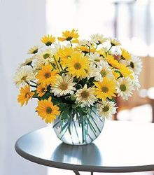 Sunny Daisy Bowl from Martinsville Florist, flower shop in Martinsville, NJ