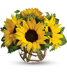 Sunny Sunflowers from Martinsville Florist, flower shop in Martinsville, NJ