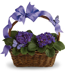 Violets And Butterflies from Martinsville Florist, flower shop in Martinsville, NJ