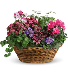 Simply Chic Mixed Plant Basket from Martinsville Florist, flower shop in Martinsville, NJ