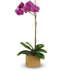 Imperial Purple Orchid from Martinsville Florist, flower shop in Martinsville, NJ