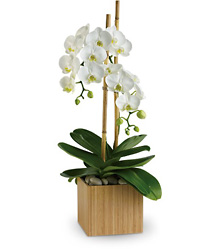 Opulent Orchids from Martinsville Florist, flower shop in Martinsville, NJ