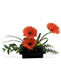 Zen Gerbera Bowl from Martinsville Florist, flower shop in Martinsville, NJ