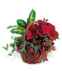 Holiday Planter Basket from Martinsville Florist, flower shop in Martinsville, NJ