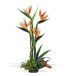 Bird of Paradise from Martinsville Florist, flower shop in Martinsville, NJ