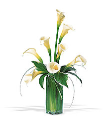 White Callas from Martinsville Florist, flower shop in Martinsville, NJ