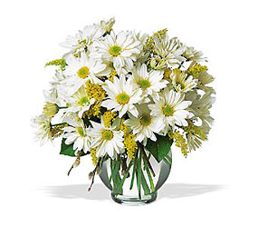 Daisy Cheer from Martinsville Florist, flower shop in Martinsville, NJ