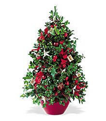 Boxwood Tree from Martinsville Florist, flower shop in Martinsville, NJ