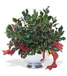 Holly Bowl from Martinsville Florist, flower shop in Martinsville, NJ