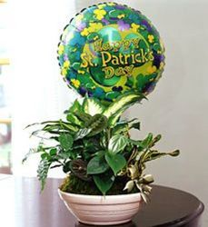 St Patricks Day Dish Garden from Martinsville Florist, flower shop in Martinsville, NJ